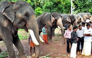 Puthenkulam Elephant Village